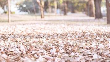 Pink petals on the ground photo