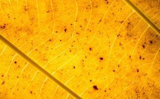 primer plano de la hoja amarilla