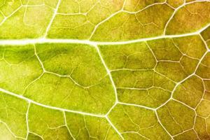 Yellow leaf pattern