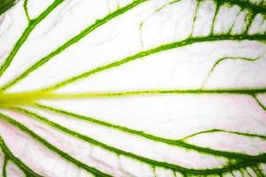 Leaf pattern, close-up