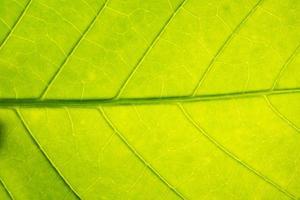 primer plano, de, un, hoja verde foto