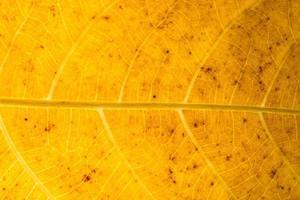 Dry leaf pattern