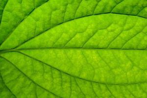 Close-up of a green leaf
