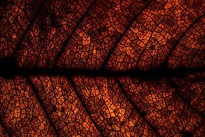 Brown leaf pattern