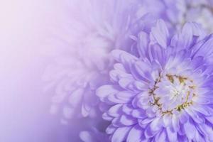fondo de flor morada