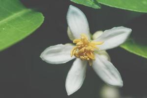 Dark flower background
