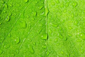 Drops on a green leaf
