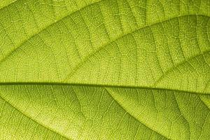 Green leaf pattern photo