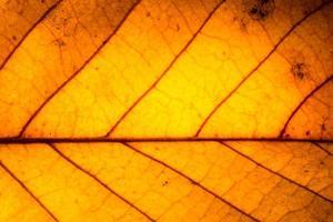 Dry leaf pattern photo