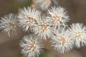 Grass flower close-up