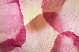 Pink flower petals close-up
