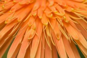 Orange flower background photo