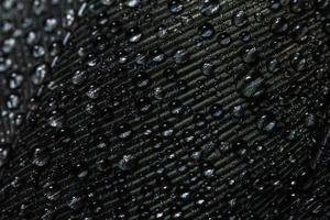 Water drops on a feather