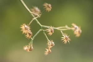 primer plano de flores silvestres