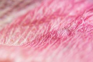 Pink flower petals close-up