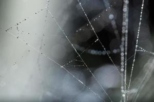 Water drops on the spider web, close-up