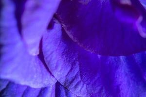 Colorful purple petals background