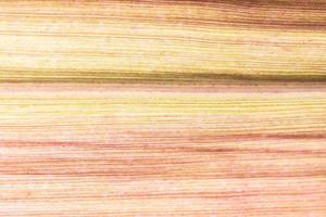 fondo natural claro foto