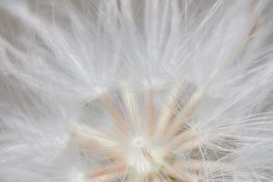 Wildflower close-up photo