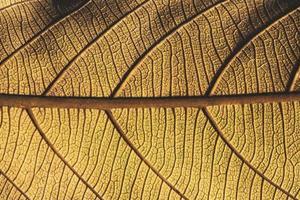 Close-up of a leaf photo