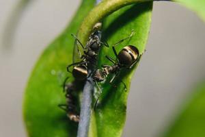 hormigas en una planta