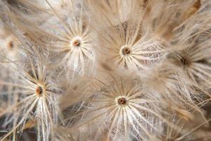 Brown wildflower close-up