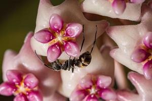 hormiga en una flor