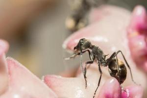 hormiga en una planta