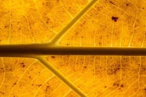 Brown leaf pattern photo