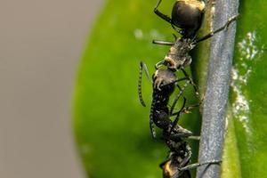 hormigas en una flor