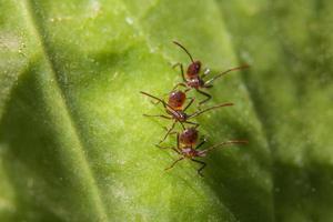 hormigas marrones en una hoja