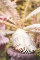 Close-up of a leaf on a fern