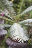 Fern leaf on a stump