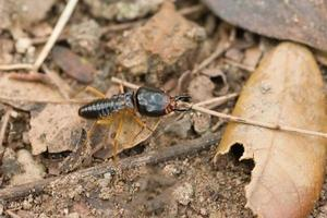 termita en el suelo
