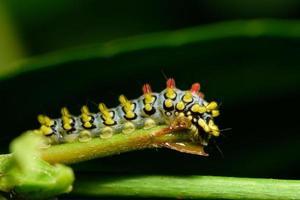 gusano en una planta