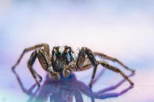 araña sobre una superficie reflectante