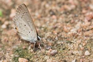mariposa en el suelo foto