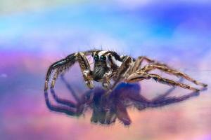 macro araña fondo de colores