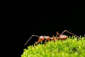 hormiga en la hierba