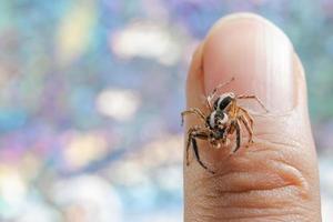 araña en el dedo de un hombre
