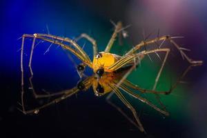 araña sobre un fondo reflectante