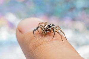 Spider on a man's finger