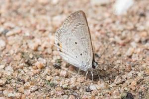 mariposa en el suelo