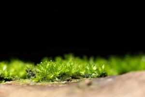 Moss on black background