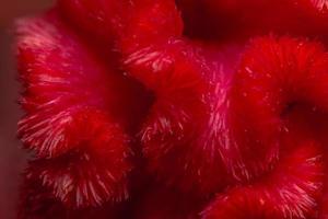 Red flower pattern background photo