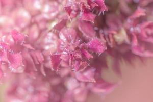 Light pink flower background