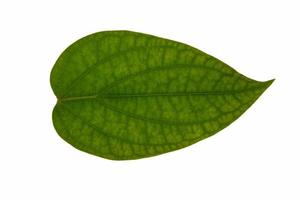 Leaf on white background photo