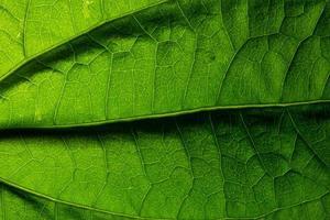 Macro leaf pattern