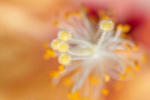 Orange pollen background