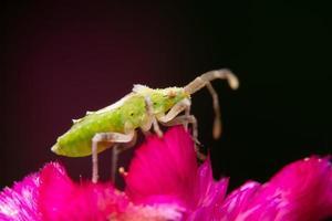 Brown assassin bug on a flower